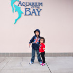 D800_004450-AquariumoftheBayPier39-blog