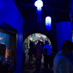 D800_004454-AquariumoftheBayPier39-blog
