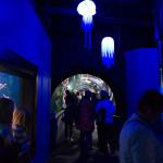 D800_004454-AquariumoftheBayPier39-blog