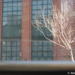 D100_05872-MyFirstPhotoWalkSF-blog