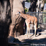 D800_017702-SanFranciscoZoo-blog