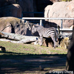 D800_017719-SanFranciscoZoo-blog