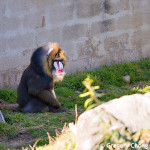 D800_017748-SanFranciscoZoo-blog