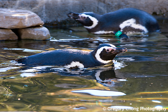 D800_017782-SanFranciscoZoo-blog