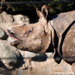 D800_017788-SanFranciscoZoo-blog