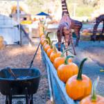 D700_038255-ArataPumpkinPatch-blog