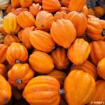 D700_038272-ArataPumpkinPatch-blog