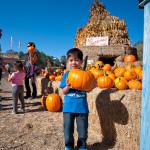 D700_038376-ArataPumpkinPatch-blog